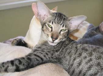 Коты атланта